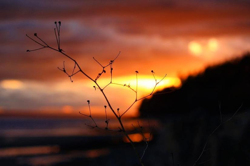 sunset-photo-photography-photographer-plant-orange-water-ocean-stick-clouds-bokeh-white rock-british columbia-canada-silhouette-beach-enhanced-saturation-cloud-amateur-puddles-sand
