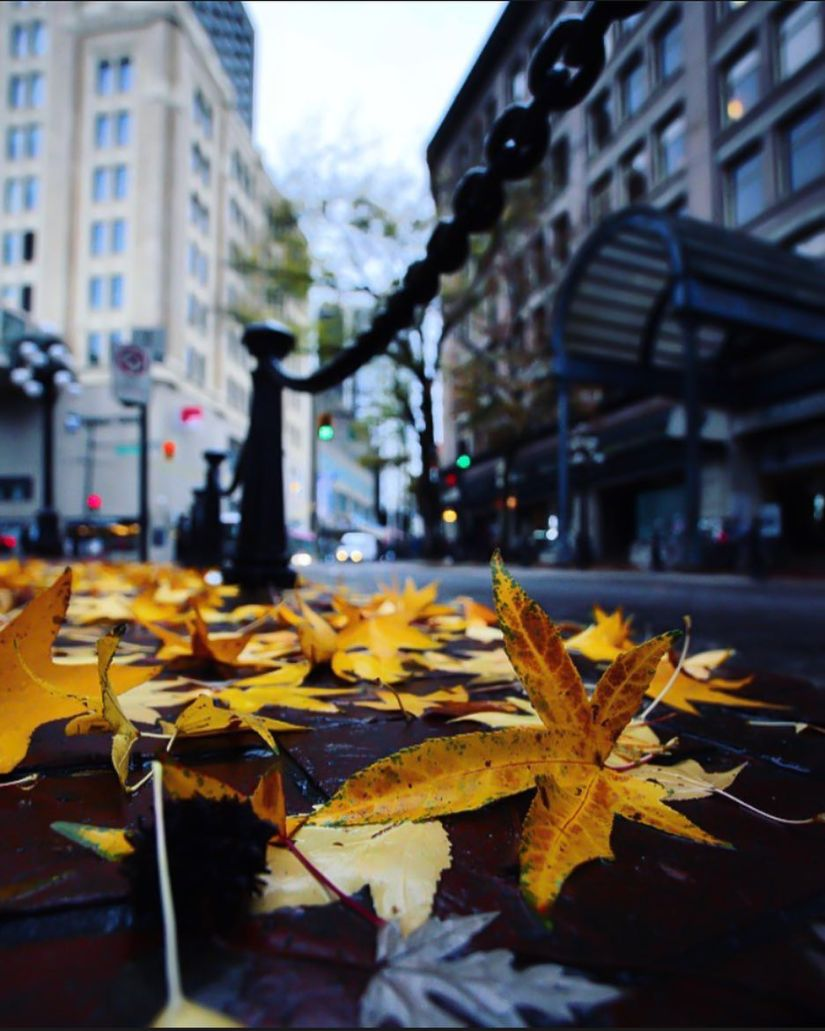bokeh-vancouver-leaves-photographer-canada-chain-poles-photography-surrey-white rock-british columbia-downtown-van-