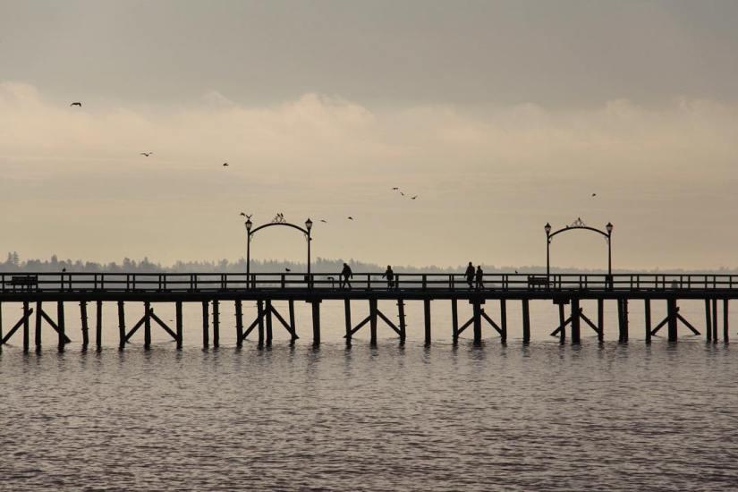 white-rock-surrey-photography-pier-silhouette-birds