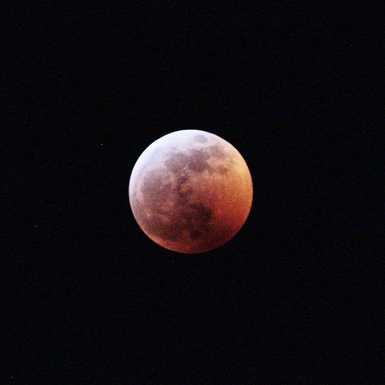Moon-blood- wolf-surrey-photography-super-british-columbia-